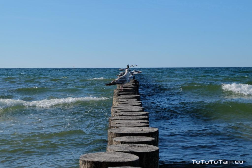 Kołobrzeg morze
