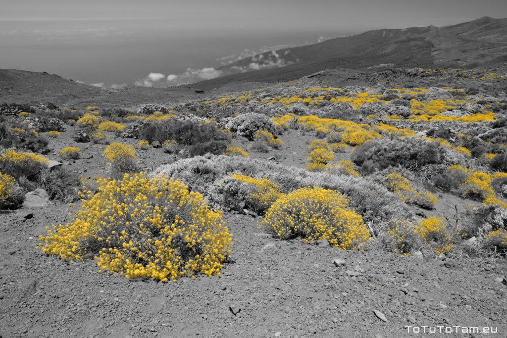 Kwiaty Strulichy Teneryfa