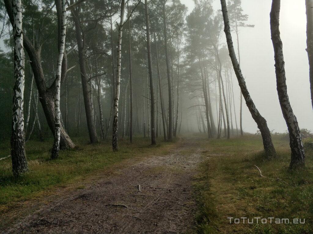 Kopalino mgła adwekcyjna