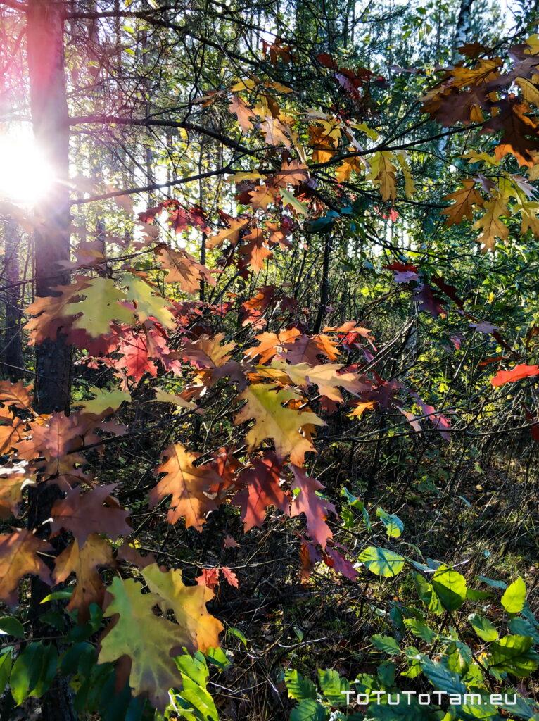 Październik Jesień